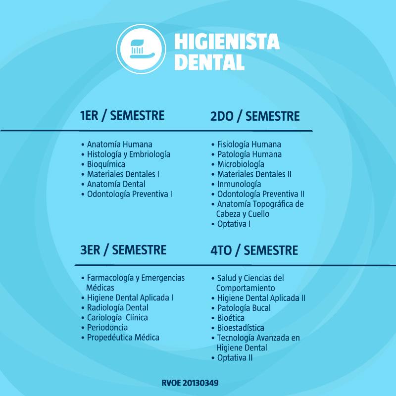 Contemporáneo Anatomía Dental Y Las Notas De Histología Dental ...